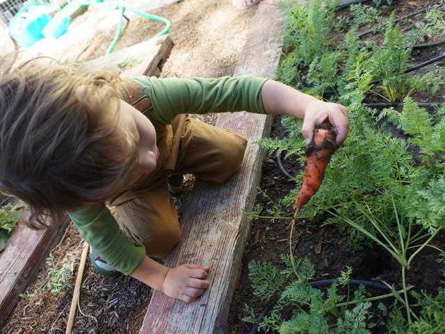Summer Harvest 2013!